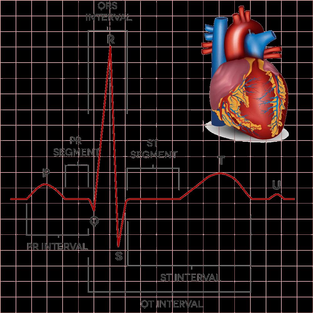 了解你的心脏健康